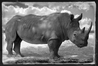 Photo: White Rhino Landscape