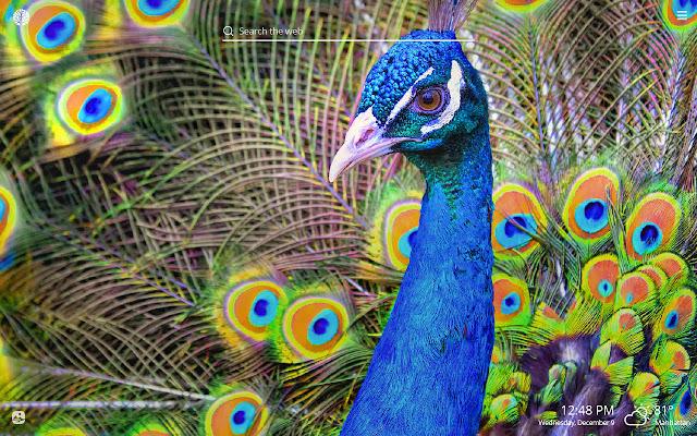 Peacock HD Wallpapers New Tab Theme