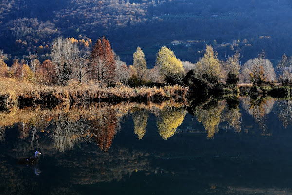 torbiere (lago di Iseo)