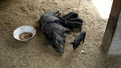 Photo: Some piglets