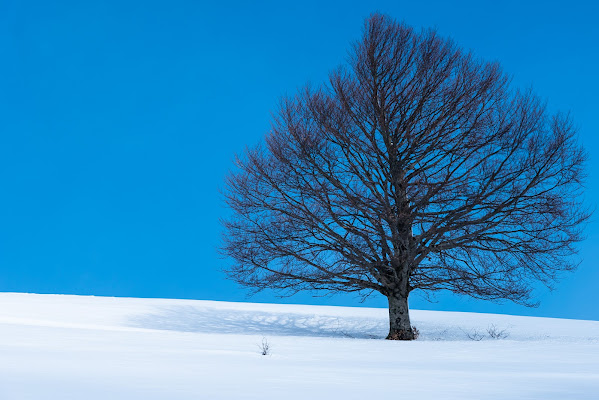 Alone in the snow di servi_marco