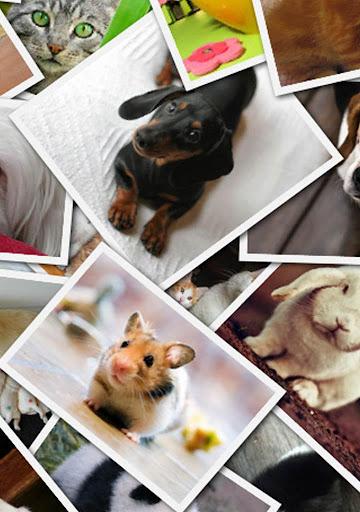 Collage Stiker Photo