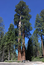 Photo: Sequoi NP