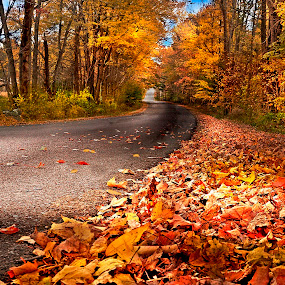 The Autumn Path by Irene Orloff - Landscapes Forests ( nature, autumn, fall, path )
