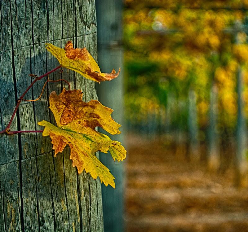 it's like autumn di Zerosedici