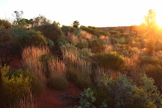 Photo: Year 2 Day 219 - Surrounding Bush in the Sunrise