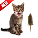 Kill Mouse Game for Cat icon