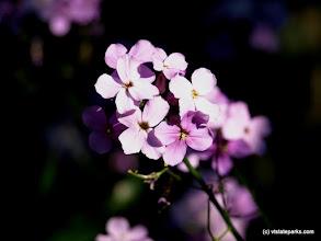 Photo: Spring flowers at Burton Island State Park by Matt Parsons