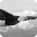 Eagle Pack 2 Live Wallpaper icon