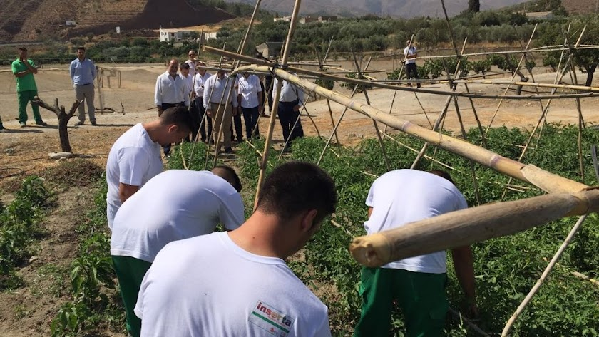 Jóvenes trabajando en uno de los huertos, son observados por los consejeros (al fondo), durante la visita.
