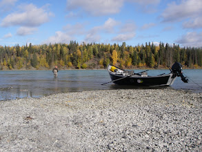 Photo: Fly fishing for rainbow trout on one of many gravel bars on the middle Kenai river. September in Alaska can have some of the most beautiful weather all year for fishing.