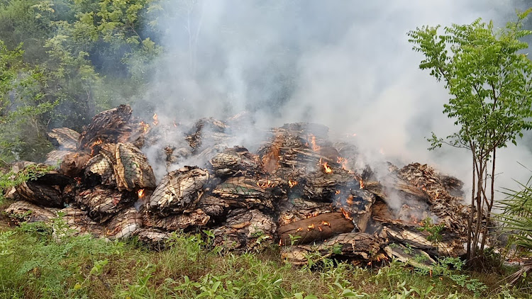 The illegal 12 tonnes of dry fish are burnt in Hindi grounds in Lamu west after they were intercepted from Somalia.