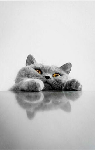 Free Cute Cat Wallpaper Hd For Android Apk Download Apkpure Co