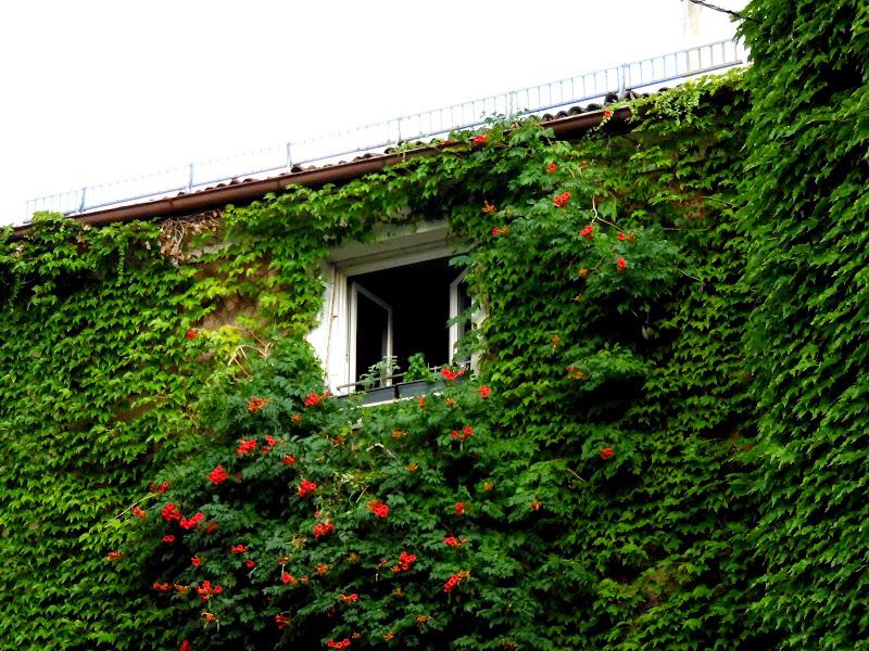 Casa mimetizzata di joysphoto