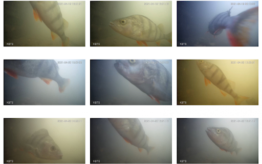 Update: Holland's fish doorbell is a worldwide hit!