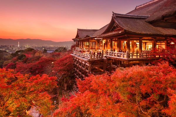 Lá phong đỏ ở Nhật Bản