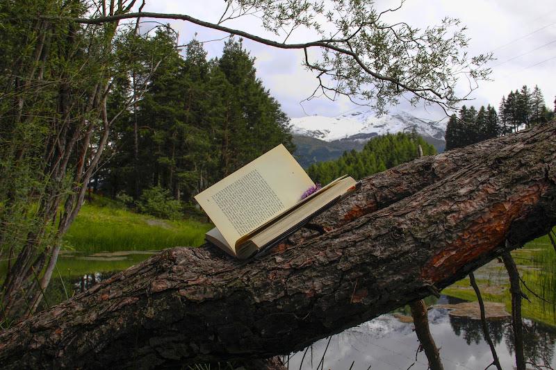 In mezzo alla natura.. Posto ideale per la lettura.... di ringhio