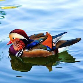 by Chairil Anwar - Animals Birds