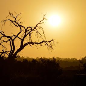 Sunset Tree by Karyn Leong - Uncategorized All Uncategorized (  )