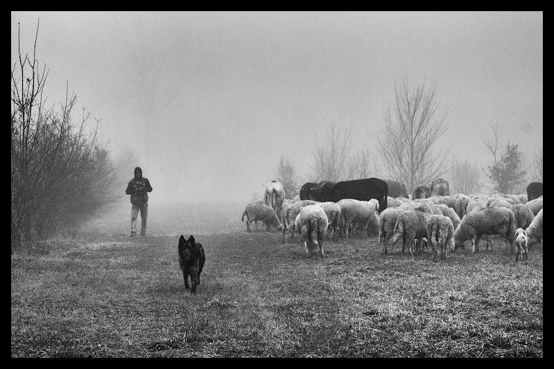 Nebbia e gregge di galubio52