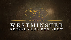 141st Westminster Kennel Club Dog Show thumbnail