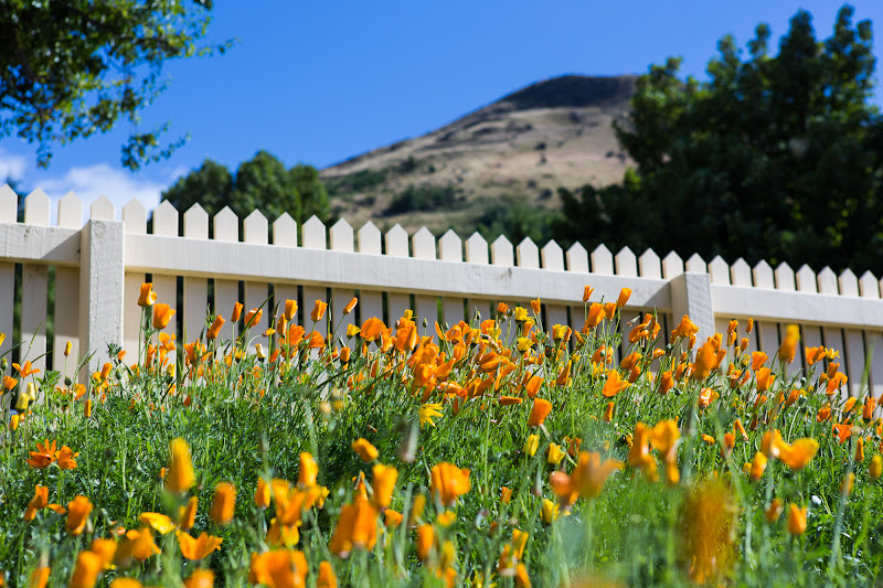 "Photo: ""Picket Fences"" - Queenstown, New Zealand"