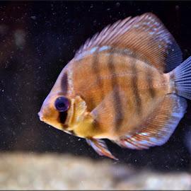 fish by Nic Scott - Animals Fish ( fish )
