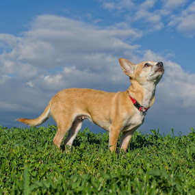 The sky is the limit by Ty Yang - Animals - Dogs Portraits ( pwc84, #GARYFONGPETS, #SHOWUSYOURPETS )