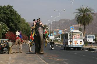 Photo: Sulassa sovussa, kamelit, norsut, skootterit, autot ...
