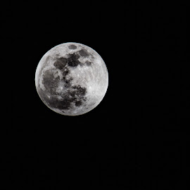 Full wolf moon  by Shanna L Christensen - Nature Up Close Other Natural Objects ( sky, moon, wolf, nature, astrophotography, night, blood, full, eclipse )