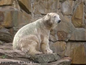 Photo: Ein interessantes Plaetzchen, findet Knut ;-)
