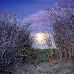 Moon on beach by Steve Struttmann - Nature Up Close Leaves & Grasses ( sand, gras, moon, blue, violet, brown, beach )