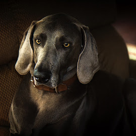 by Jim Antonicello - Animals - Dogs Portraits