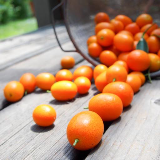 Salted Kumquat Tea
