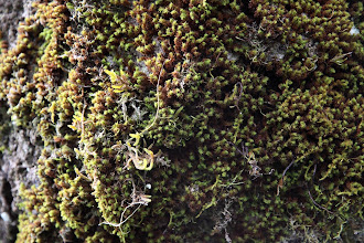 Photo: Moss growing on the trees.