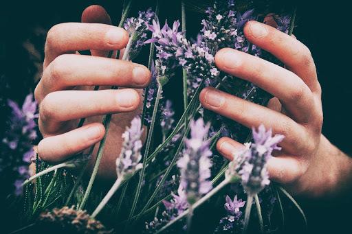 i'désir Fleur de bach 2