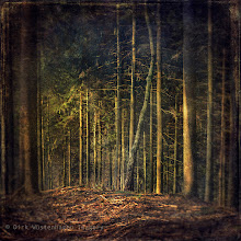 Photo: #trees #forest #textures   clearing/Lichtung Visit me here: http://wuestenhagen-imagery.photoshelter.com/ Thanks!
