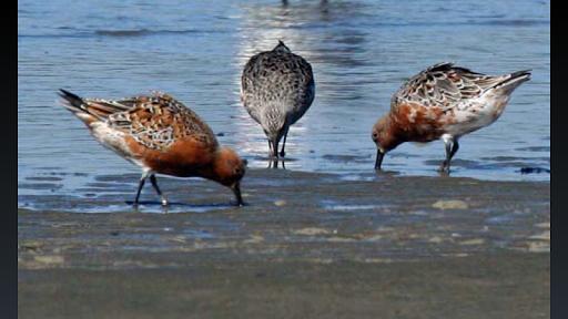 NZ Birding Checklist screenshot 8