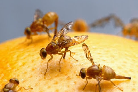 Young Student Answers Organic Debate With Fruit Flies