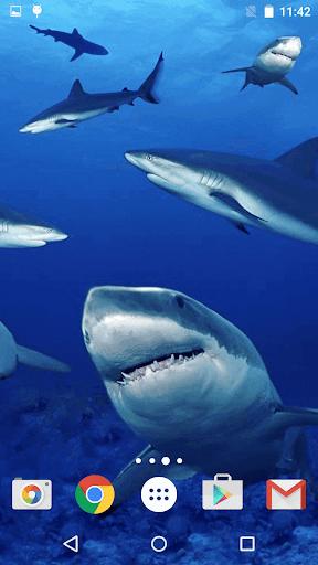 玩個人化App|鯊魚 動態壁紙免費|APP試玩