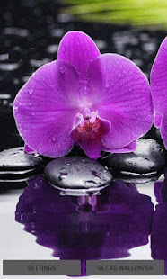 [Download Purple Orchid Live Wallpaper for PC] Screenshot 1