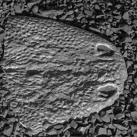 Fossil by Lanie Badenhorst - Abstract Patterns ( #fossil, #old, #nature, #texture )