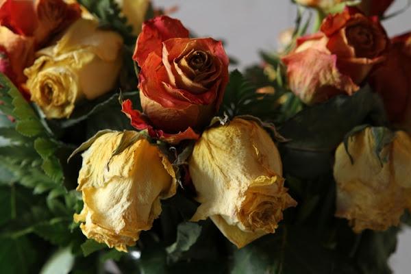 Rose di marco.sala