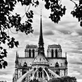 Notre Dame by Brandon Rechten - Buildings & Architecture Public & Historical ( pwcbuilding )