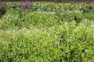 Photo: Blooming mudflats