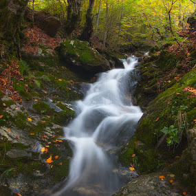 by Mehmed Mestanov - Nature Up Close Other Natural Objects ( water, tree, autumn, waterfall, moss )