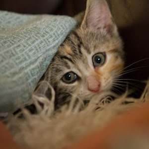 (LR) web Cat-9.jpg