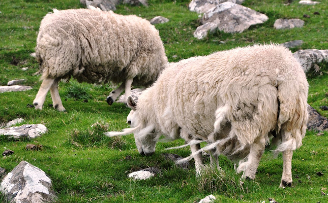 vento e nuvole di lana di Dario Marzanni