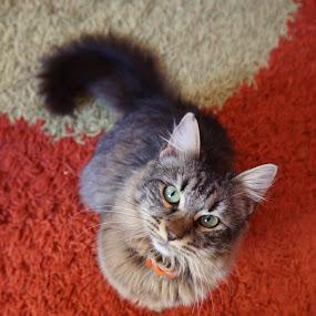 by Tadeia Fedor - Animals - Cats Portraits (  )