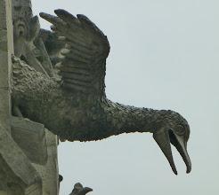 Photo: Seabird gargoyle